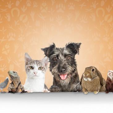 Os nomes dos animais em inglês